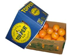 Florida Grapefuit   -   Fruchtversand24, Import, Südfrüchte, Marocco, Maroc-Produkte, Spitzenqualität, Direktimport